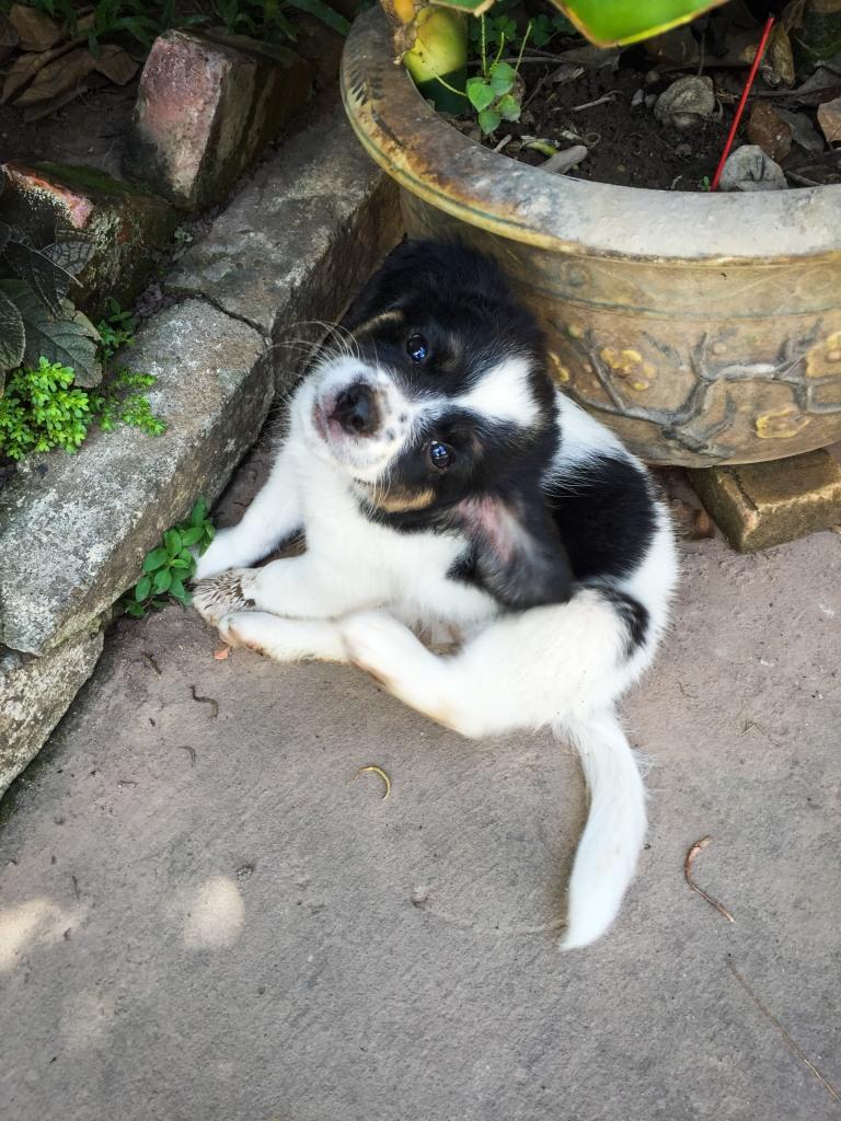 Puppy-4